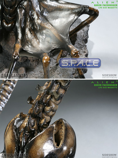 1:1 Queen Facehugger Life-Size Maquette (Alien 3)