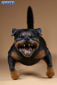 1/6 Scale Rottweiler Version B