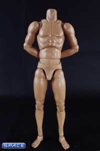 1/6 Scale Standard Muscle Arm High Body