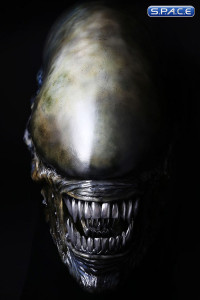 1:1 Xenomorph Life-Size Head (Alien: Covenant)