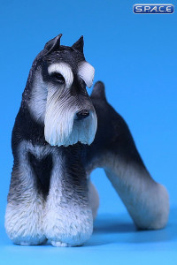 1/6 Scale black and white Schnauzer