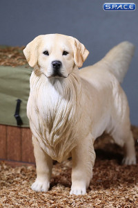 1/6 Scale Golden Retriever creme