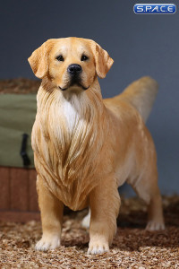 1/6 Scale Golden Retriever golden