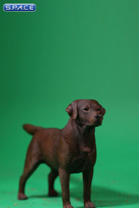 1/6 Scale Labrador Retriever chocolate