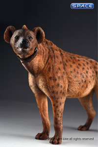 1/6 Scale dark spotted Hyena