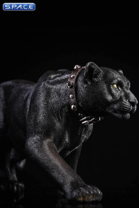 1/6 Scale black Leopard