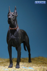 1/6 Scale black Great Dane