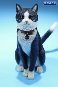 1/6 Scale black & white Cat
