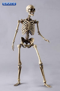1/6 Scale The Human Skeleton Metal Body