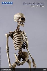 1/6 Scale The Human Skeleton Metal Body