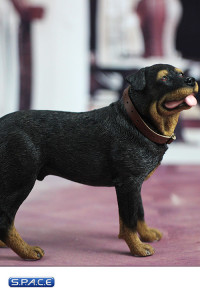 1/6 Scale Rottweiler
