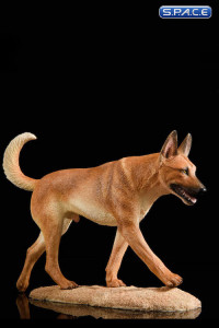 1/6 Scale light brown Malinois