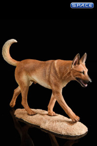 1/6 Scale dark brown Malinois