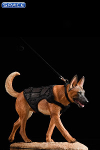 1/6 Scale dark brown Malinois with Tactical Outfit