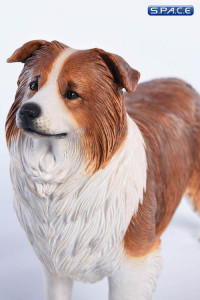 1/6 Scale brown & white Border Collie