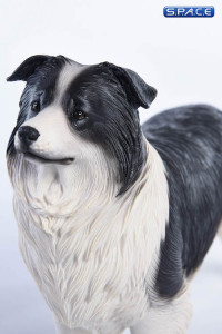 1/6 Scale black & white Border Collie
