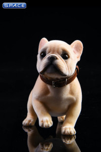 1/6 Scale French Bulldog Puppy (sand color)