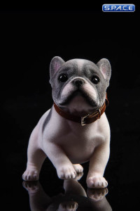 1/6 Scale French Bulldog Puppy (black and white)