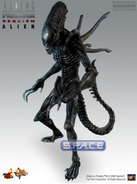 1/6 Scale Alien with Facehugger Model Kit (AvsP: Requiem)