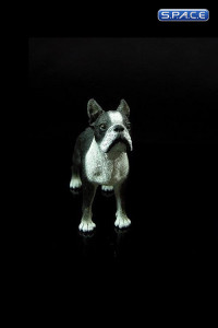 1/6 Scale Boston Terrier (Dog Series)